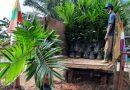 Disbunak Paser Setor Rp192 juta Hasil Penjualan Bibit Sawit
